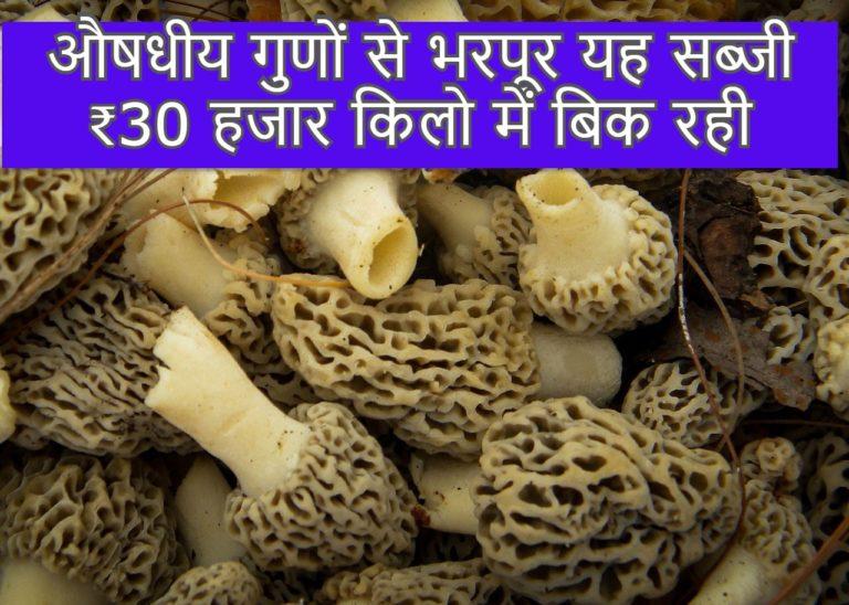 औषधीय गुणों से भरपूर यह सब्जी ₹30 हजार किलो में बिक रही