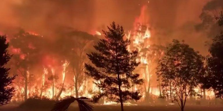 आस्ट्रेलिया के जंगलों में लगी आग से हुआ भारी नुकसान