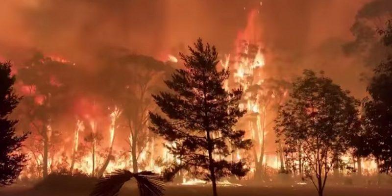 आस्ट्रेलिया के जंगलों में लगी आग