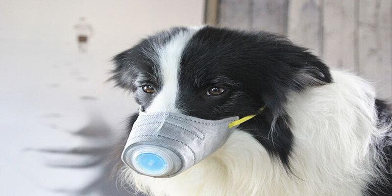 कोरोना वायरस के डर के चलते चीन में पालतू जानवर मारे जा रहे