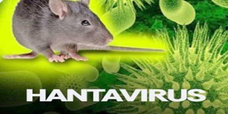 क्या अब कोरोना के बाद हंटा वायरस तबाही मचाएगा : जाने हंटा वायरस के बारे में