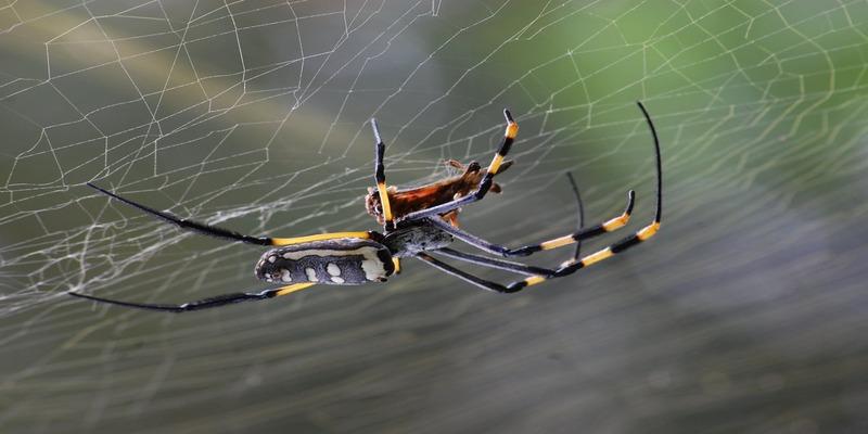 मकड़ी का जहर दिलाएगा दर्द से निजात
