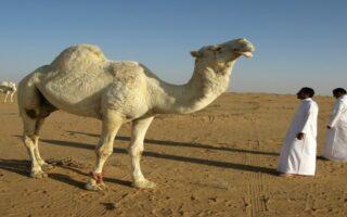 सऊदी अरब में पीने लायक पानी कहां से आता है