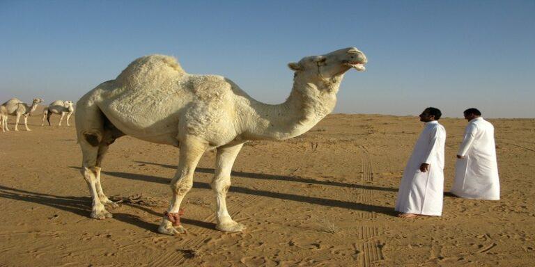 क्या आप जानते हैं सऊदी अरब में पीने लायक पानी कहां से आता है ?
