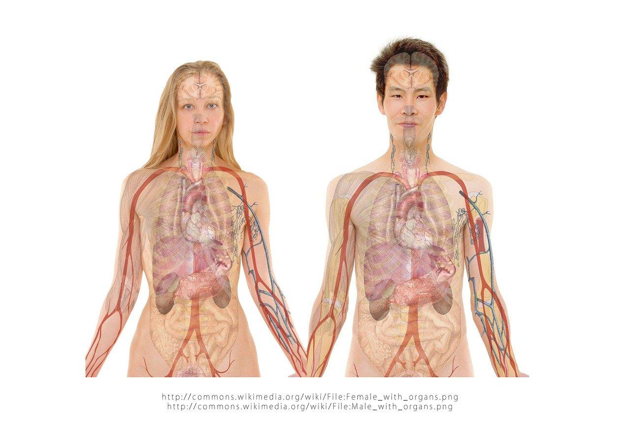 शरीर का स्वस्थ होना काफी हद तक लीवर के स्वास्थ्य पर निर्भर है।