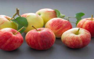 सेब खाने के है कई फायदे, इसका सेवन रखता है कई बीमारियों से दूर
