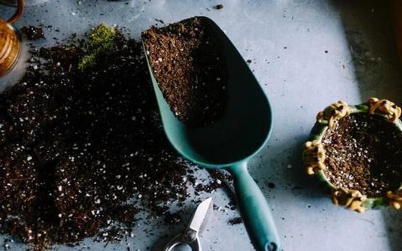 चाय बनाने के बाद इस्तेमाल की हुई चाय पत्ती से बनाए इस तरह बेहतरीन खाद Compost