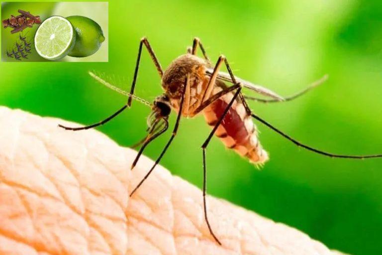 कोरोना के मौसम में मौसमी बीमारियां ज्यादा खतरनाक हो सकती हैं, इसलिए खुद को बचाएं