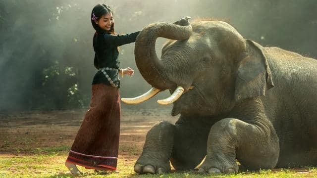 जानिए हाथियों के बारे में ये रोचक बातें