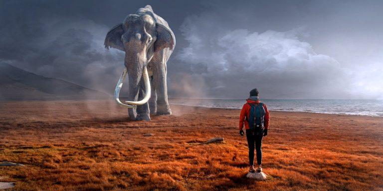 हाथियों को रेल हादसों से बचाने के लिए लगाए जा रहे हैं थर्मल सेंसर